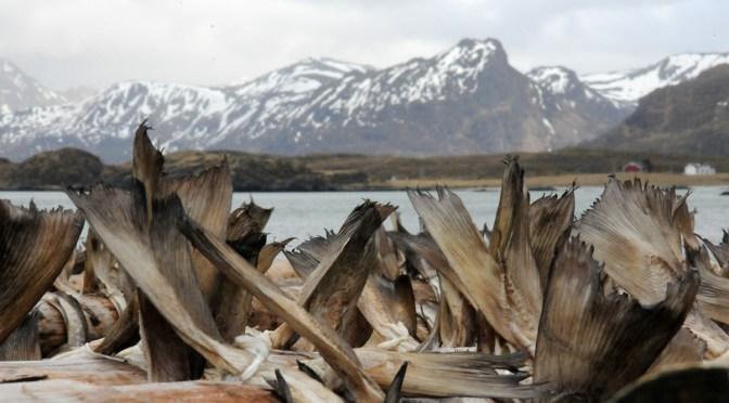 Premiers pas sur l'archipel des Lofoten