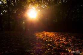 Autumn Fantasy : The Power of the Sun (Photo : Gilderic)