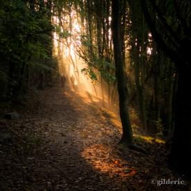 Autumn Fantasy : Dans le cone de lumière(Photo : Gilderic)