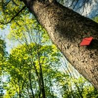 Mise au vert : comment bien profiter d'un jour férié ?