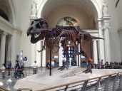 SUE the T. Rex at the Field Museum.
