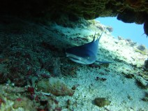gili-divers-gallery-13