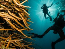 gili-divers-gallery-9
