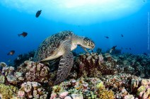 gili-divers-gallery-16