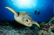 gili-divers-gallery-18