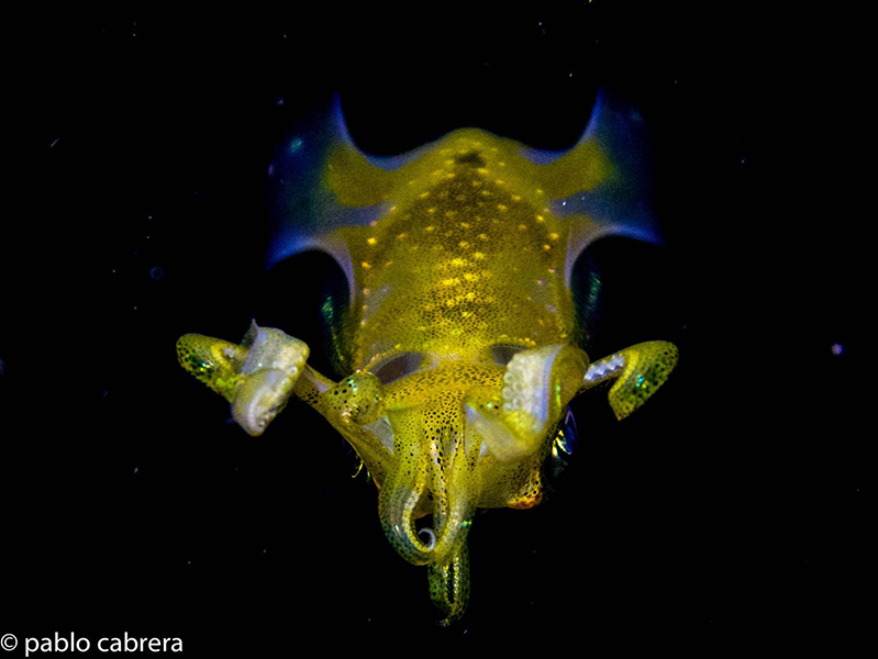 gili-divers-gallery-19