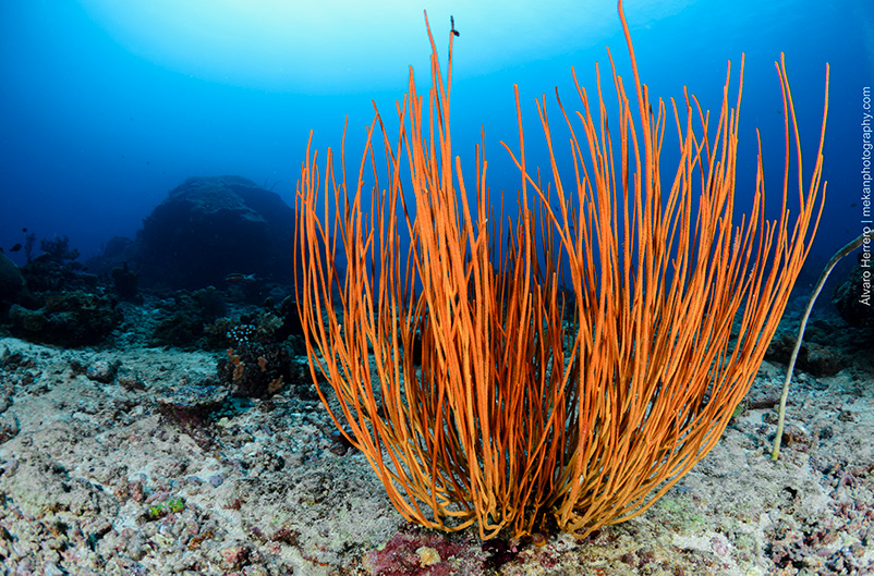 gili-divers-gallery-24