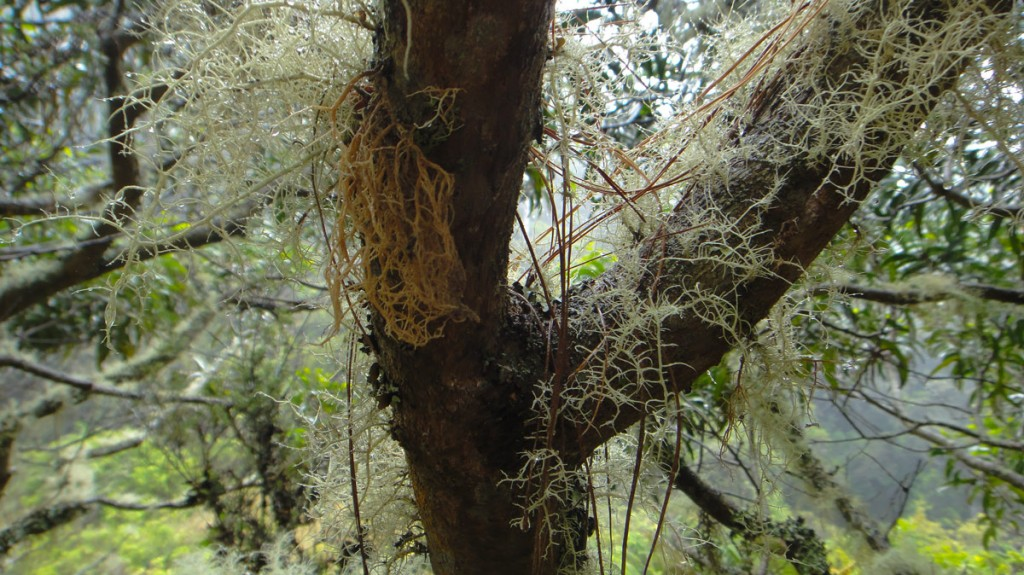 Lichens Lichens everywhere