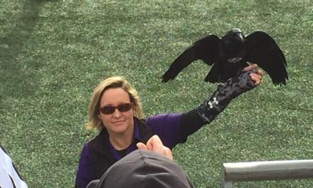 Ravens – Steelers  12/27/15