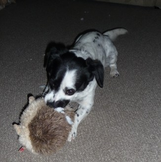 Charlie and the hedgehog