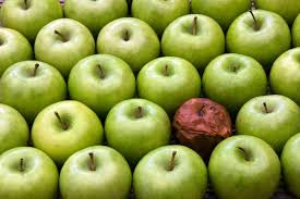 a bad apple in a bunch of good apples