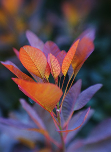 Colourful leaves 2