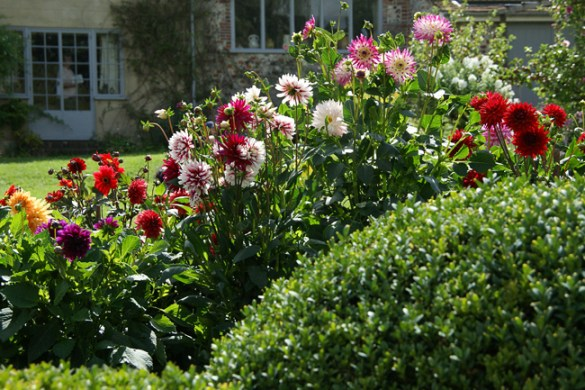 Dahlias, Charleston Farmhouse