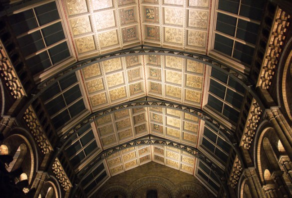 Ceiling, Natural History Museum
