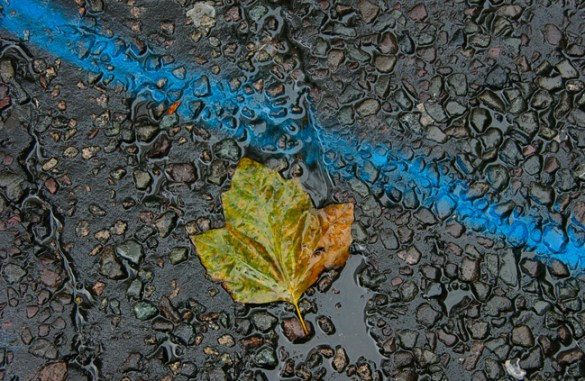 Blue line and leaf