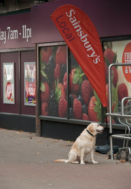 Sainsbury's dog
