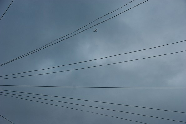 Bird with telephone wires