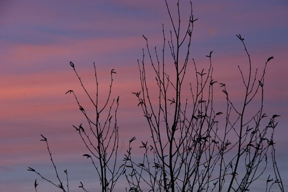 Sunset with branches