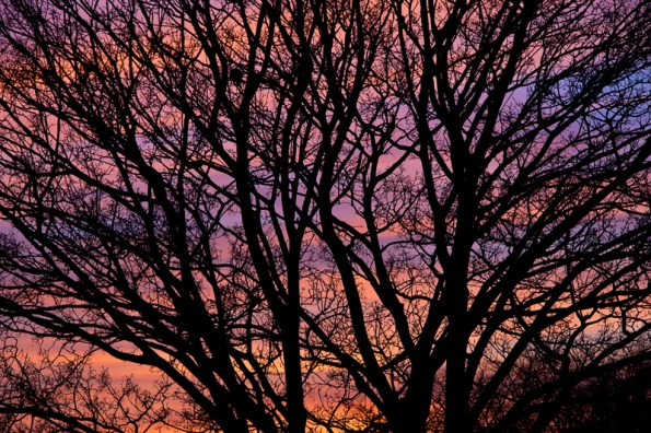 Tree branches with sunset behind