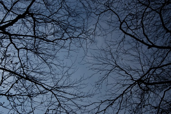 Bare branches, looking up