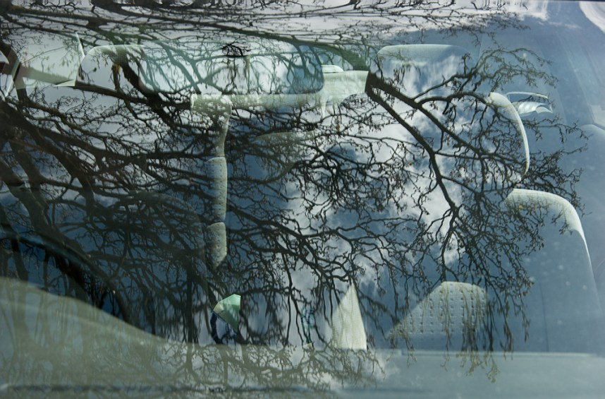 Tree reflected in car window
