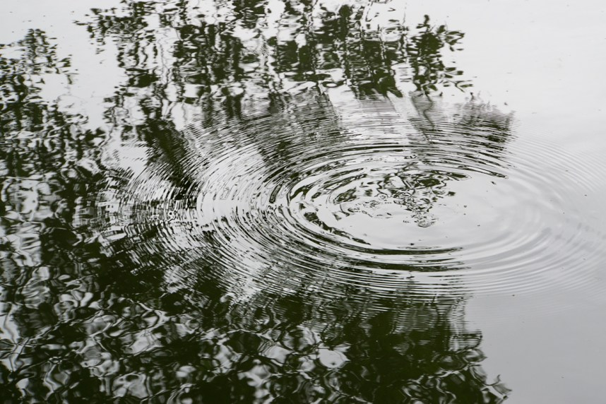 Circular ripples with tree reflection