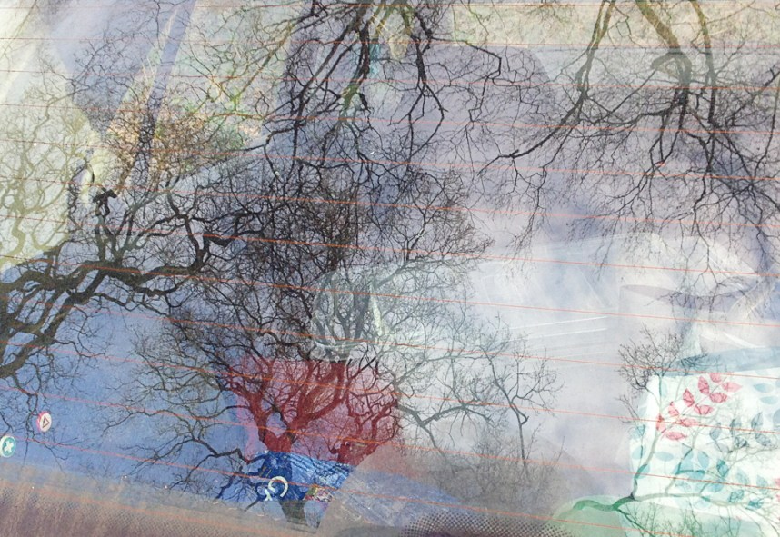 Car windscreen with tree reflection