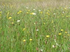 A carpet of wild flowers