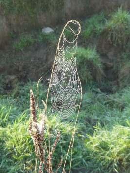 Orb web 2