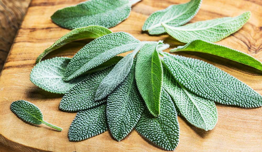 Growing Sage: Your Guide to Planting & Growing a Sage Plant  Gilmour