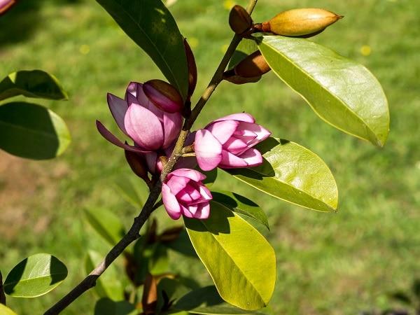 Jardin de la Vallée à Berville-en-Roumois
