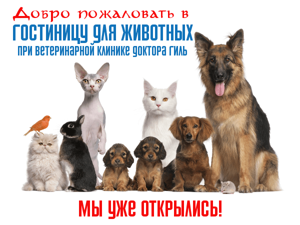 Зоогостиница в Санкт-Петербурге