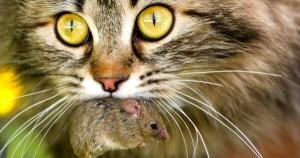 Ветеринарный врач Рогозина Е. И. рассказывает о том, что такое токсоплазмоз, как проявляется токсоплазмоз у кошек и как человеку не заболеть этим заболеванием.