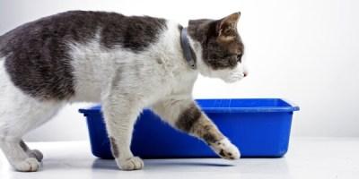 Ветеринарная нефрология в Санкт-Петербурге. Терапевтическое лечение болезней почек у собак и кошек, а также решение урологических проблем.