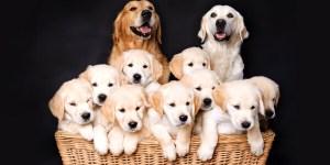 Репродуктолог Сажнева М. А. рассказывает, как происходит определение овуляции у собак и какие диагностические исследования нужно для этого провести.