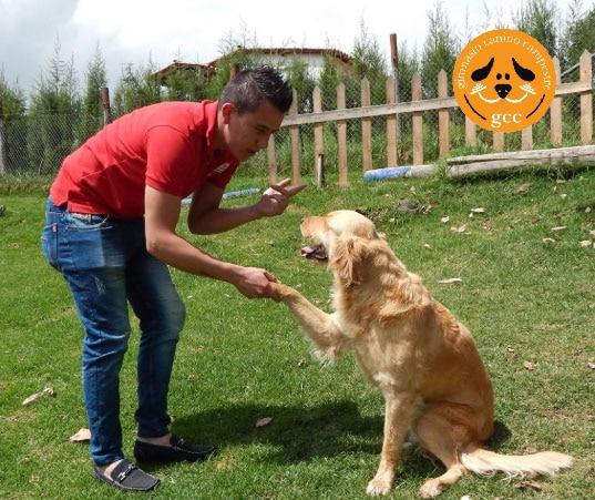 Colegio Canino - Guardería Canina