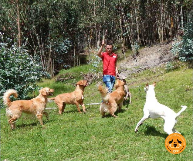 Juegos de Perros Dirigidos