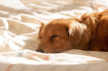 愛犬の体調を管理できる犬にやさしいアプリを紹介!