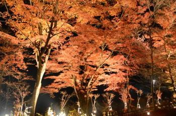 山中湖の紅葉祭りの内容は? 開催される具体的な場所はどこ?