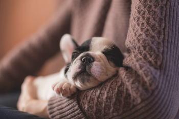 犬が寒いのにハァハァしているのは病気なの?