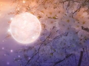 卯辰山のお花見で夜景を楽しむスポットは?