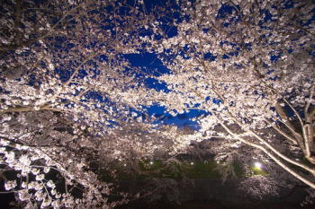 卯辰山公園花見のまとめ