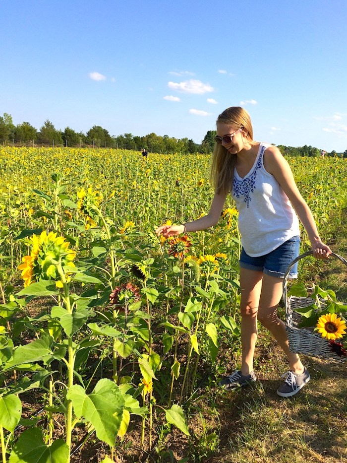 Picking Sunflowers | What I Learned in August