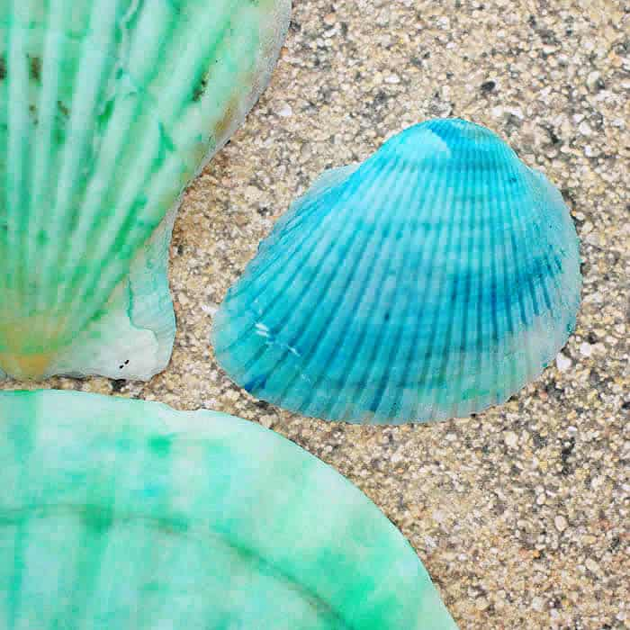 Hw to Dye Seashells