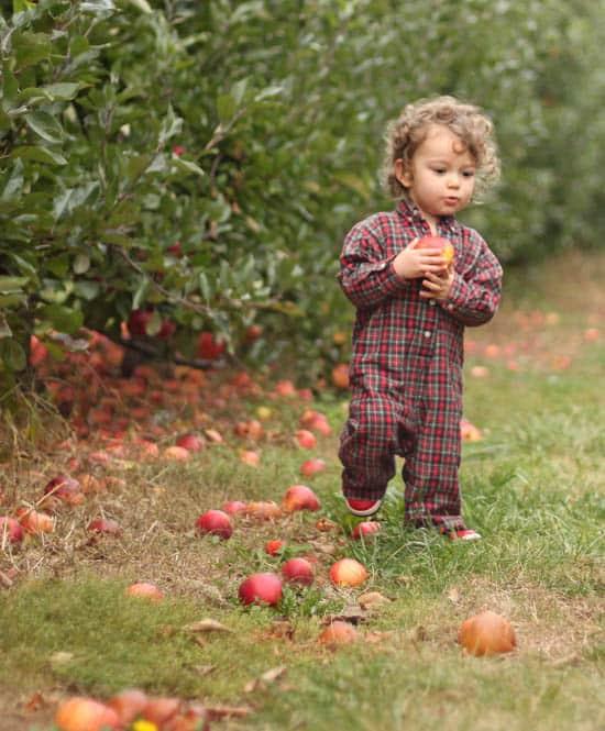 Apple Picking baby