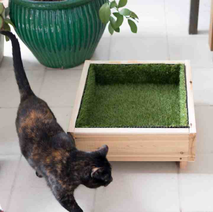 Cat Grass Bed DIY