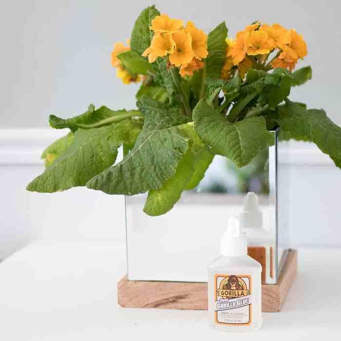 Mirror Planter DIY