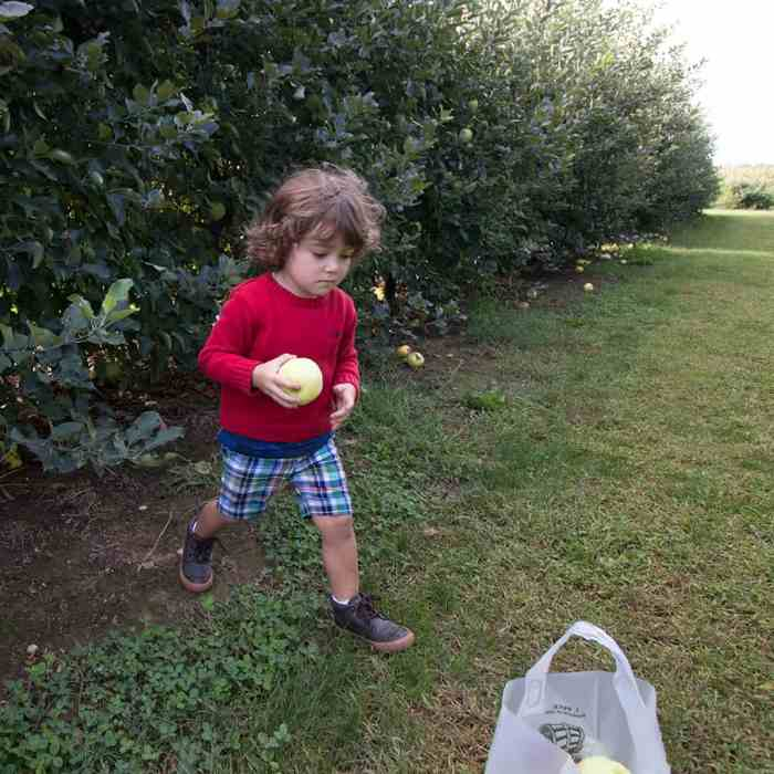 Apple Picking at Seven Ponds Orchard