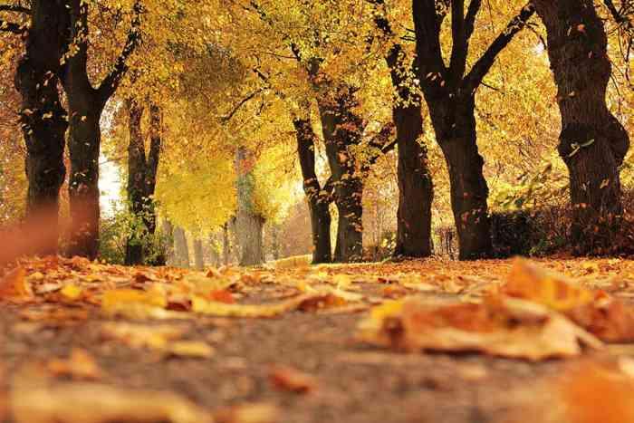 6 Autumn Wellness Tips