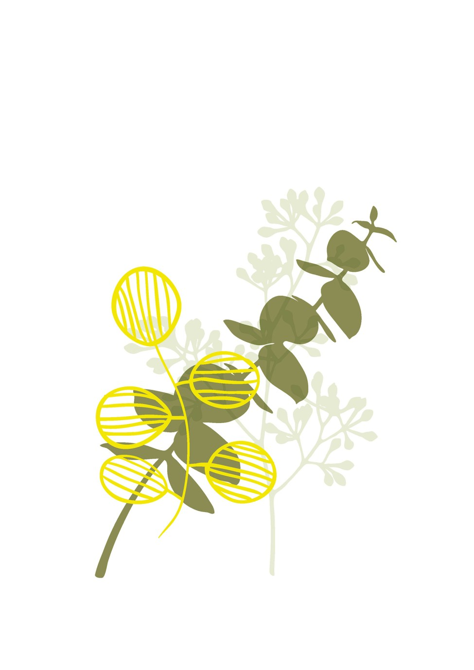 australian-flowers-illustration-03